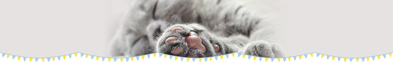 ふれあい猫カフェ併設の仔猫・猫さん 専門店「koneconeko」のお問い合わせ