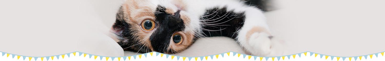 ふれあい猫カフェ併設の仔猫・猫さん 専門店「koneconeko」のよくある質問