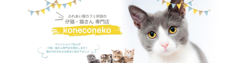 ふれあい猫カフェ併設の仔猫・猫さん 専門店「koneconeko」。ペットショップあんが仔猫・猫さん専門店を開店します!猫が大好きな方は是非ご来店下さい♪