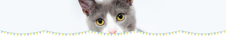 ふれあい猫カフェ併設の仔猫・猫さん 専門店「koneconeko」のこねこねことは